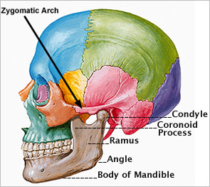 Jaw pain and TMJ: Locating bony landmarks