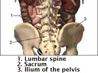 lowbackbones
