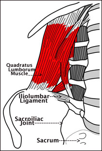 iliolumbar ligament - photo #24