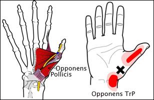 thumb-oppoens1