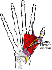thumb-tendon