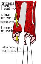 ulnar-nervecubital-tunnel