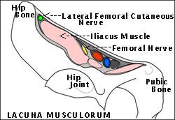 lacunamusculorum